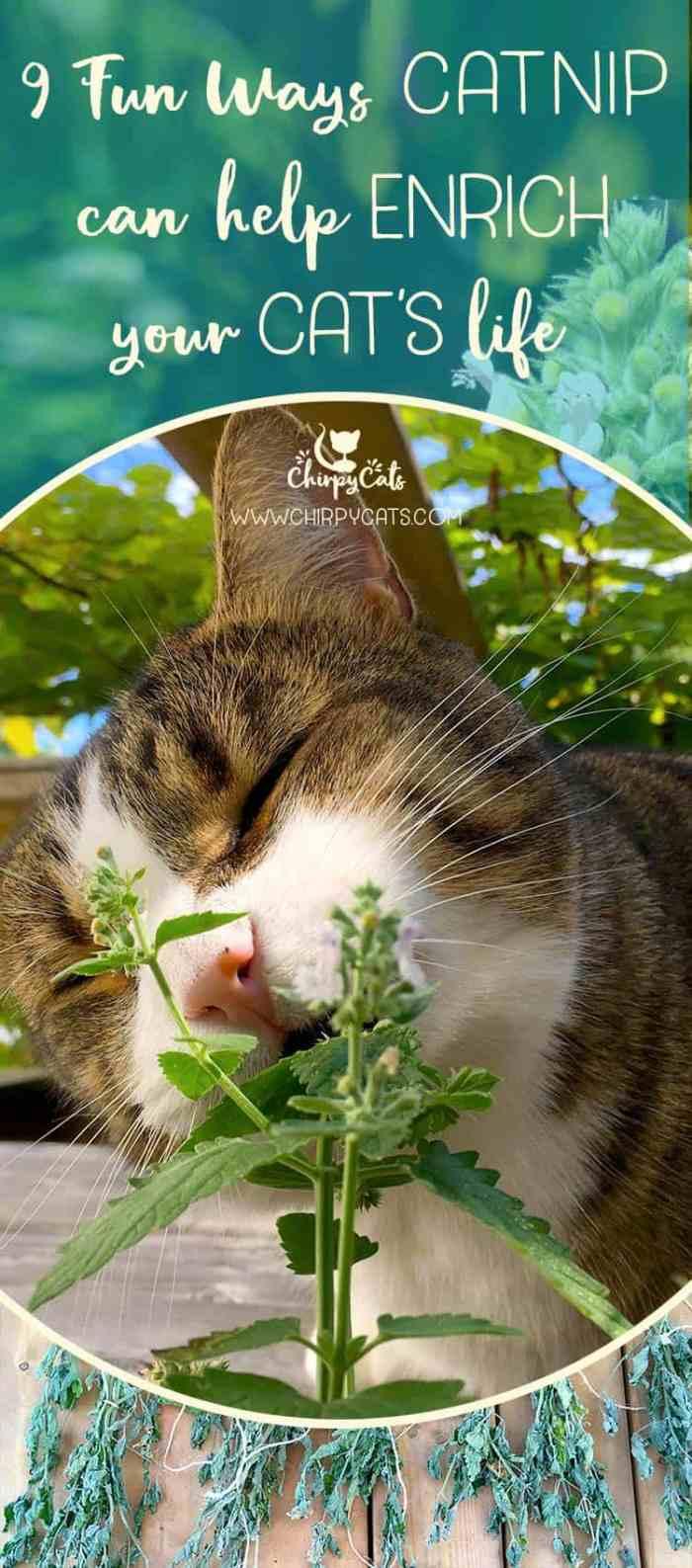 9 Ways catnip can enrich your cat\'s life