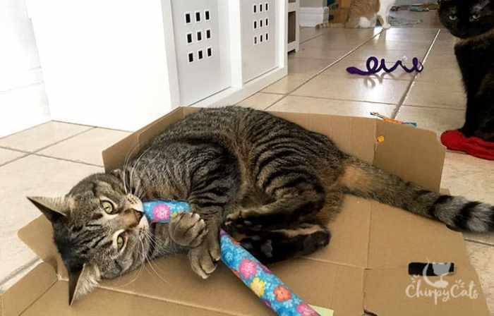Baggy bunny kicks the cat kicker toy