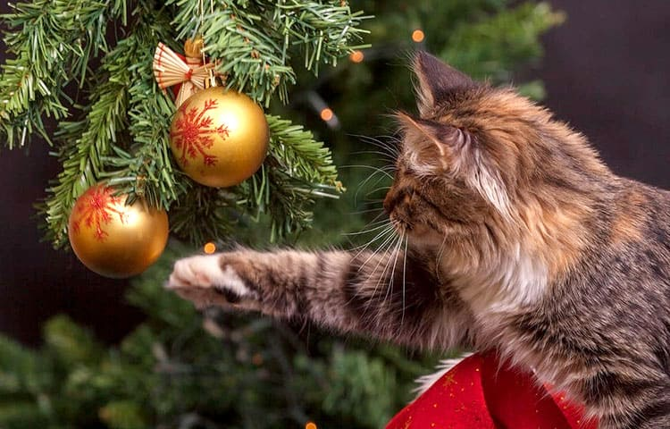 5 Toxic holiday plants to avoid when you have cats