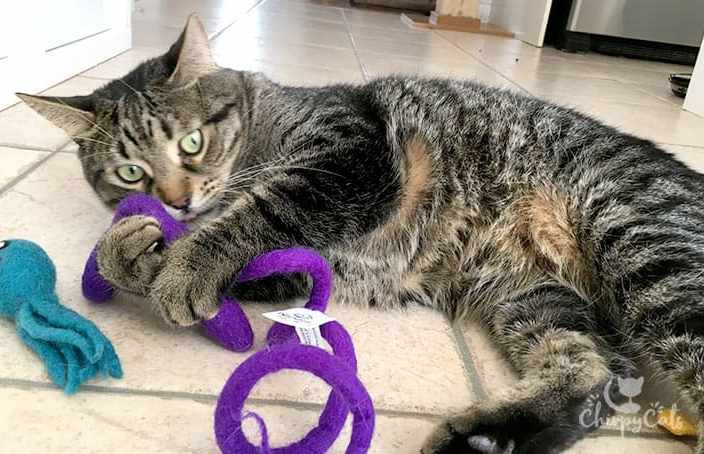 Ollie the cat plays with his new purple snake toy
