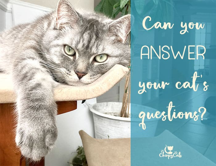 Mr. Jack the cat rests on his barstool and poses a few questions.