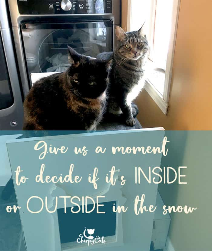 Cats want to go outside, but want to stay inside