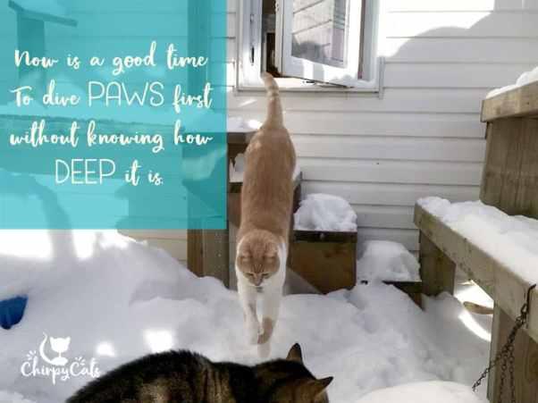 cat diving in snow