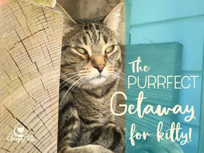 cat's purrfect getaway in catio condo