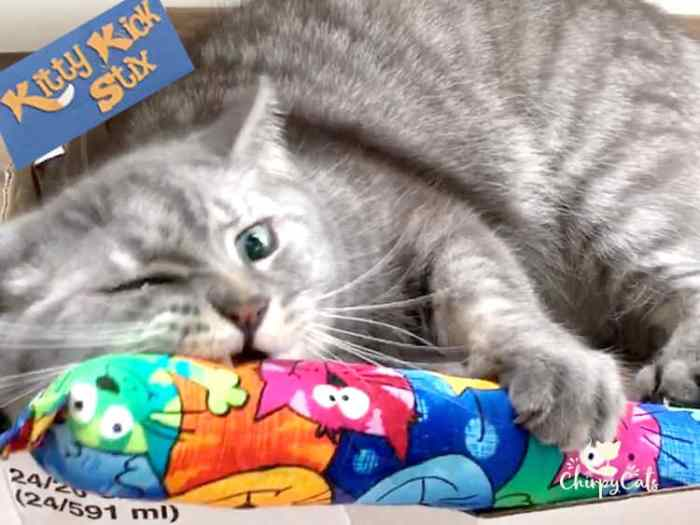 Mr. Jack the cat playing with his Kitty Kick Stix kicker toy