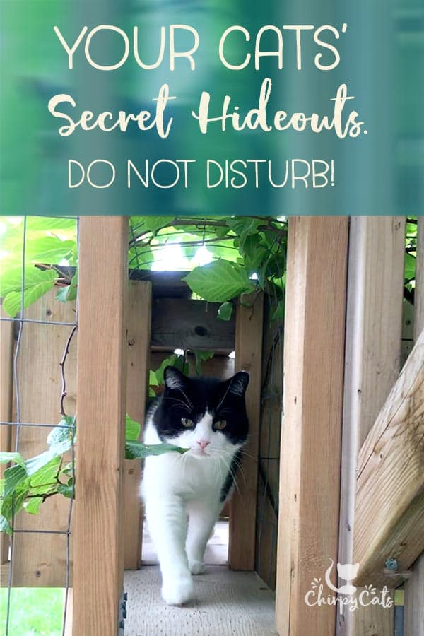 The Inside Scoop on Your Cats' Secret Hideouts