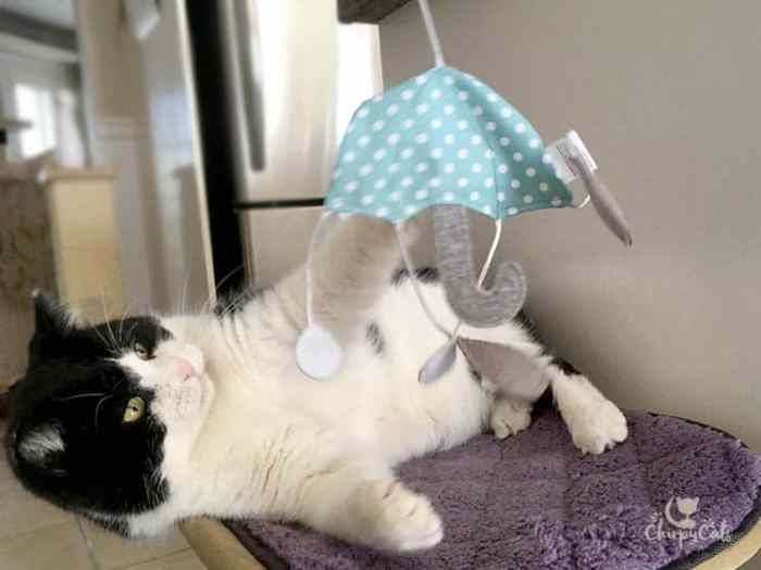 Sly Pie from the Chirpy Cats plays with the umbrella dangler toy from the KitNipBox