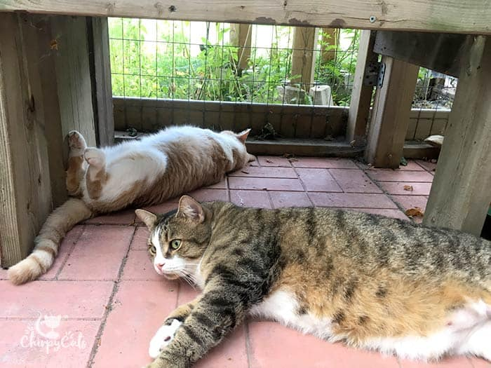 cats seek the cool shade under the wooden bench in the catio