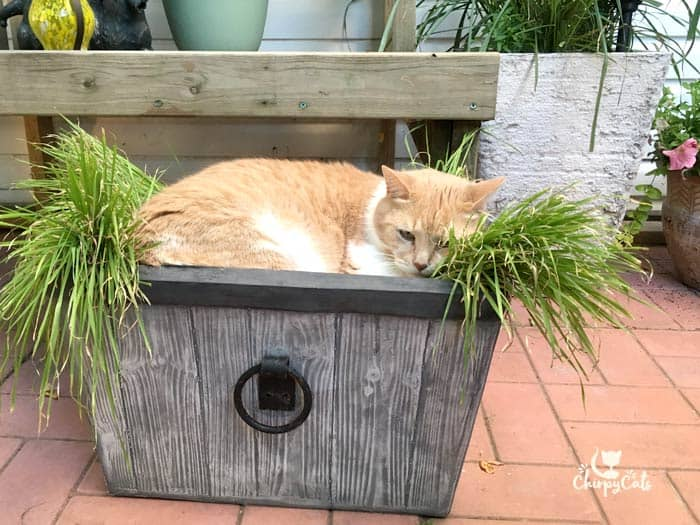 Keep your cat cool in a heat wave
