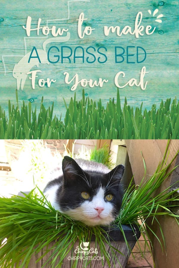 How to make a comfy grass bed for your cat