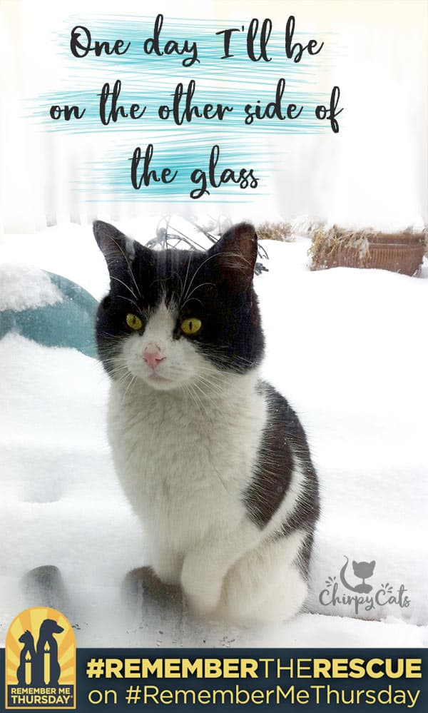 How one homeless cat made it to the other side of the glass #RememberMeThursday