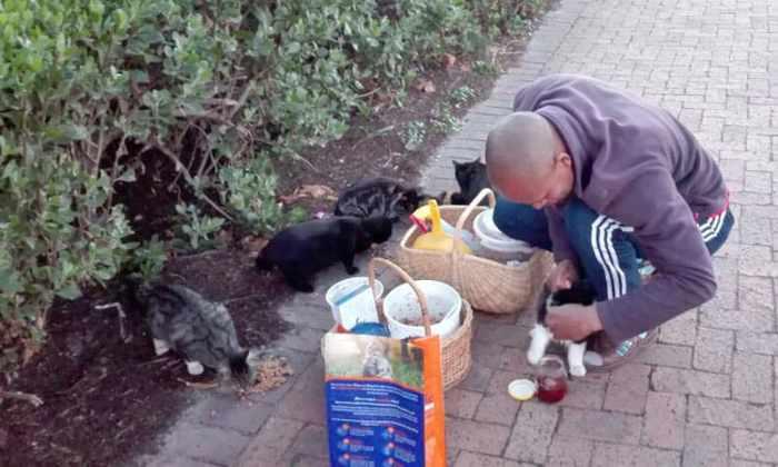 TUFCAT feral cat project at UWC campus