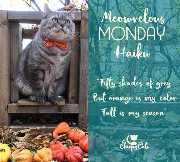 Pumpkins, Bow Ties and Meowvelous Monday Haiku