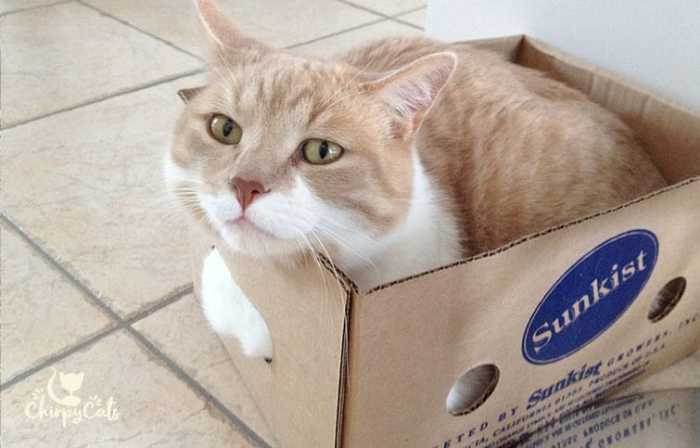 cute cat in box