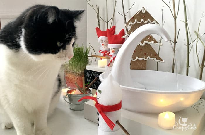 Tuxedo cat stares at a homemade cat toy at the water fountain