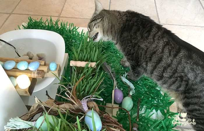 A spring Oasis for cats featuring the Bamboo Accents fountain and cold porcelain cat toys