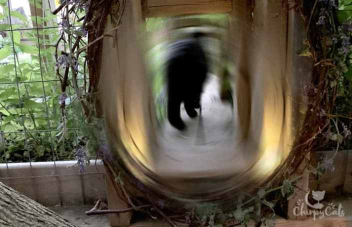 blurred image of a cat walking through a cat tunnel