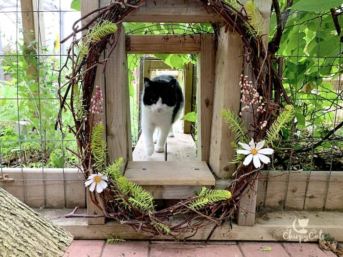 tuxedo cat walking through a cat tunnel decorated with flower wreaths