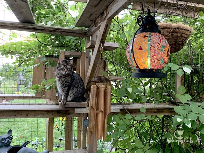 brown tabby sitting on a perch in catio with a glowing mosaic lantern