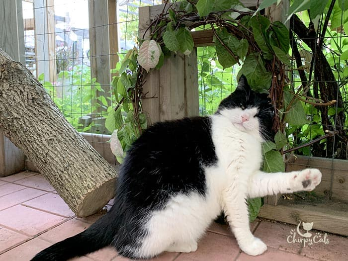 cat rubbing against vine