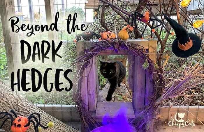 Halloween tortie cat walking through the catio tunnel