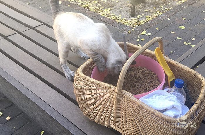 Feral cat digging into a food basket