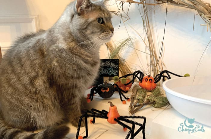 gray tabby cat sitting next to homemade spider toy cat toys