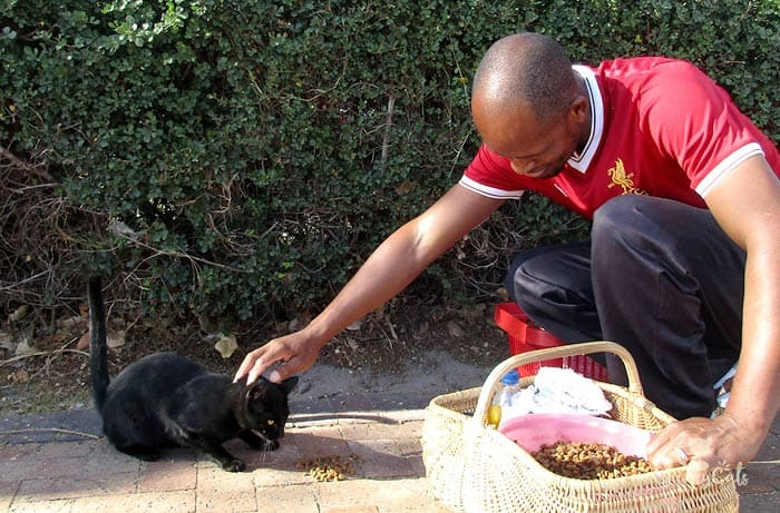 stroking feral cat while eating