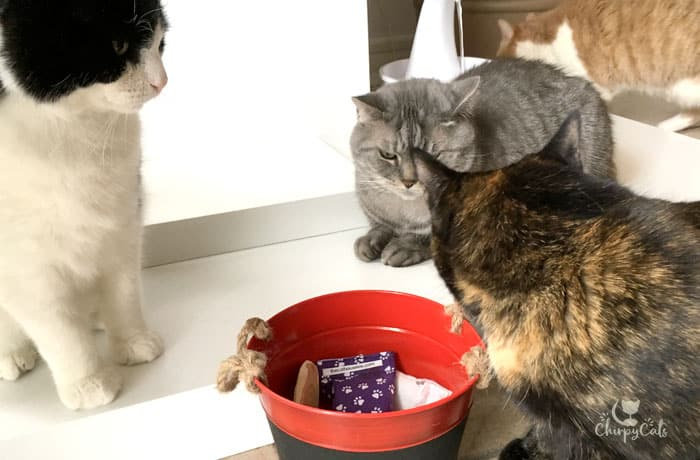 Cats are rummaging through a red bucket filled with honeysuckle toys