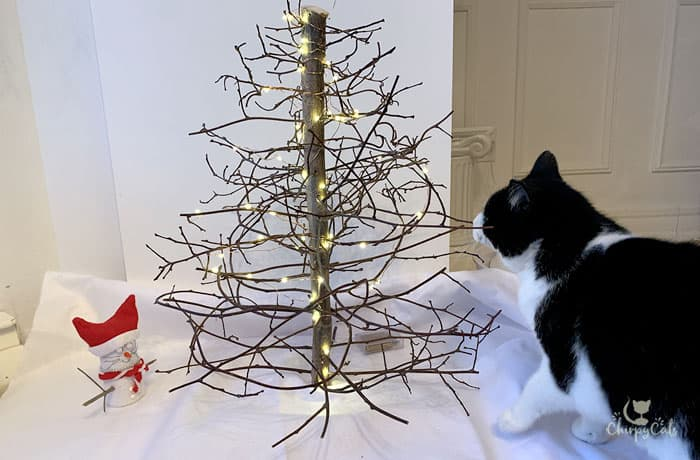 curious tuxedo cat is fascinated by the miniature DIY cat Christmas tree