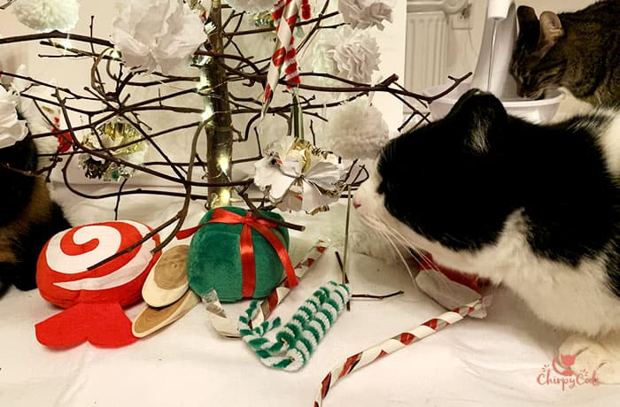 cats are enjoying hanging out at the new Catmas tree