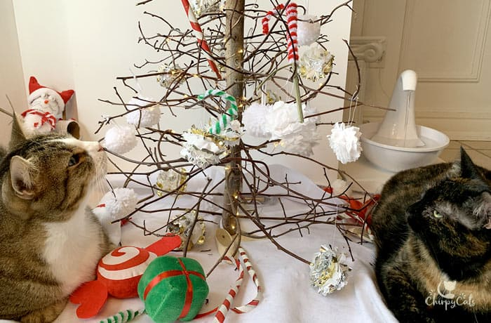 tabby cat and tortoiseshell cat chill at the DIY Christmas Catmas cat tree