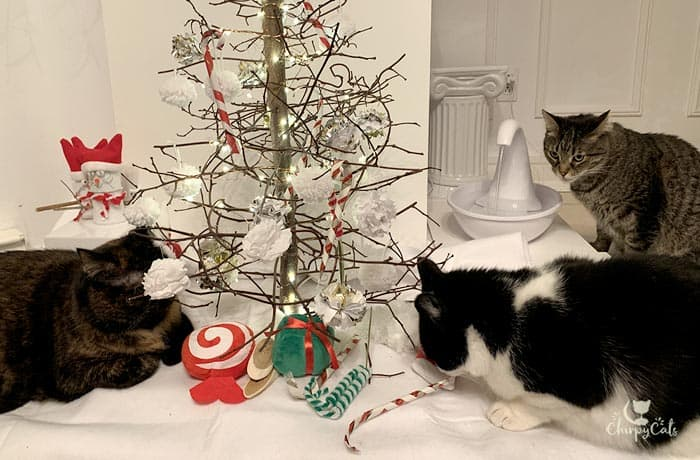 multiple cat sniffing and playing with cat toys at the Christmas tree