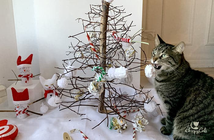 tabby cat biting at the branches of his miniature cat tree