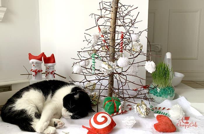 sleeping cat at the kitty Christmas tree
