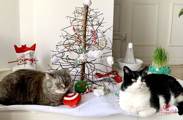 Cats chilling near the Christmas tree