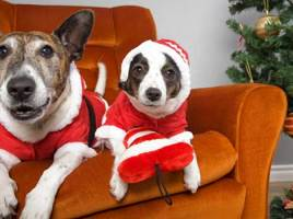 Christmas Gift Ideas for Dogs