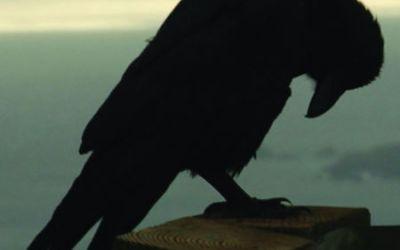 Kafka on the Shore: The Boy Named Crow