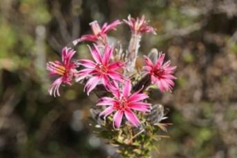 trek2 flowers1 jc