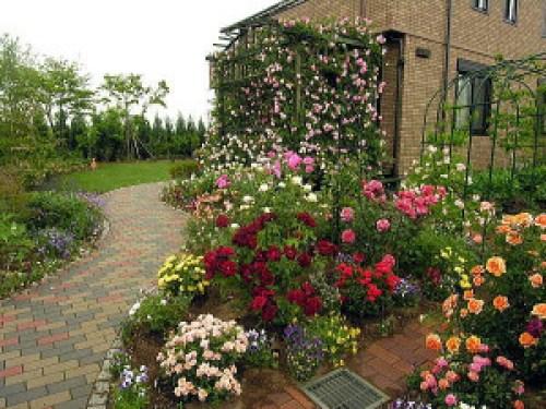 rosas jardin