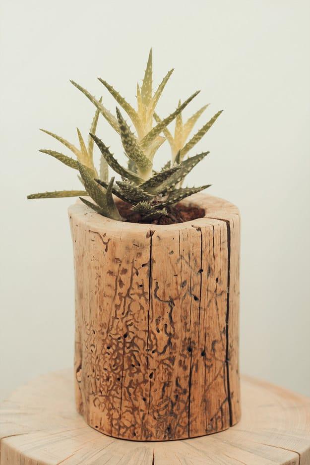 Arredare-casa-con-ceppi-di-legno-Vaso-per-pianta