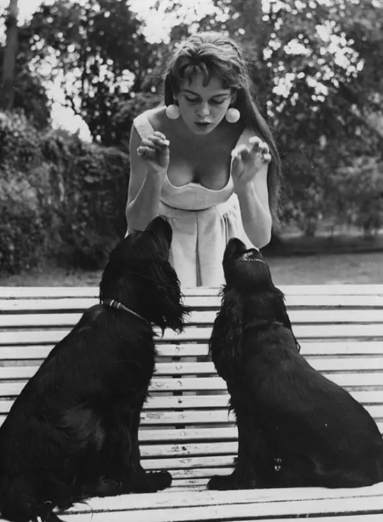 Brigitte Bardot and her black spaniels