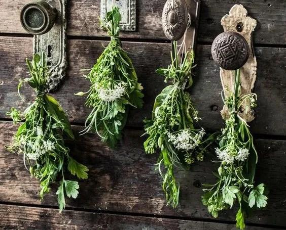 60 билки и тяхната употреба
