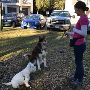Dog Training in Austin, TX