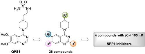 small resolution of  evaluation of novel quinazoline 4 piperidinesulfamide derivatives as inhibitors of npp1 european journal of medicinal chemistry 2018 147 130 149