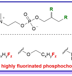 gagnon m c auger m paquin j f progress in the synthesis of fluorinated phosphatidylcholines for biological applications organic biomolecular  [ 1768 x 466 Pixel ]