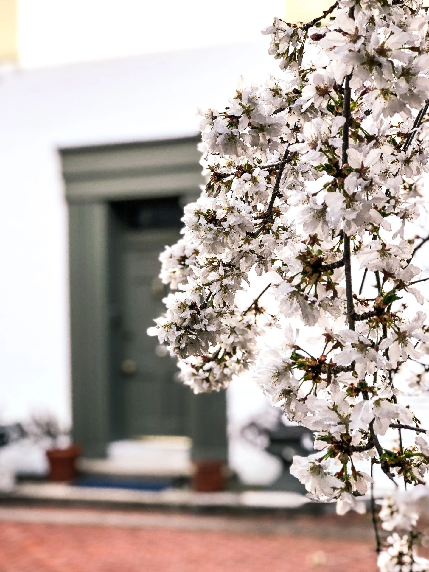 Lifestyle Blogger Chocolate and Lace shares her photo diary of Philadelphia flowers in the Spring.