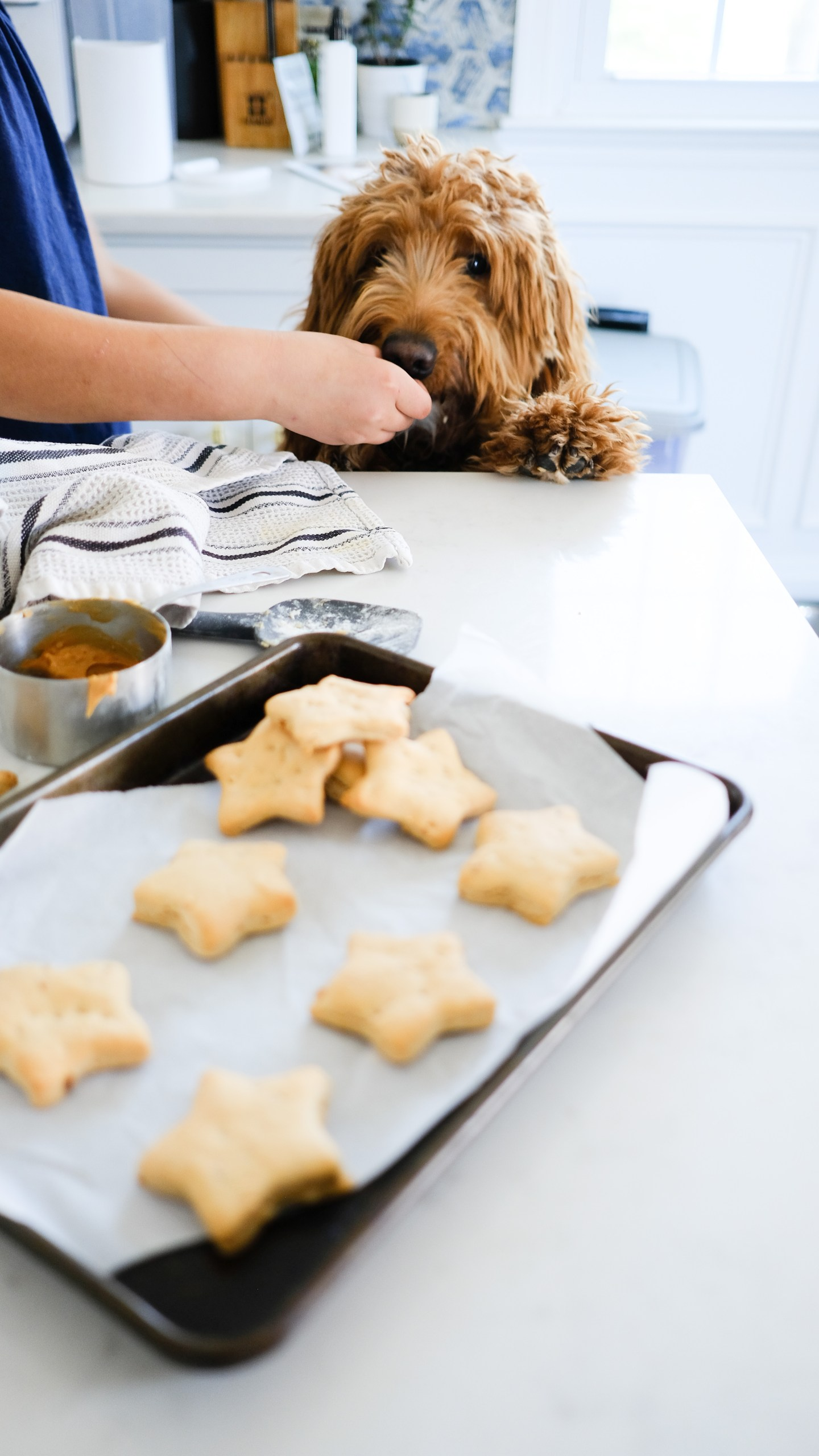 Chocolate and Lace shares her recipe for star shaped peanut butter dog treats.