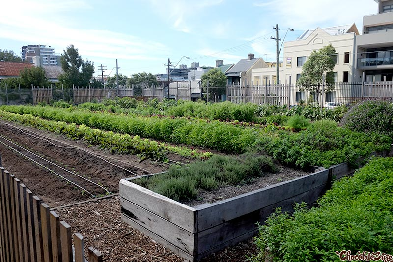 Garden at Acre Eatery, Glebe
