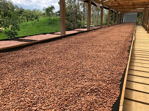 Drying and Shipping the cocoa beans